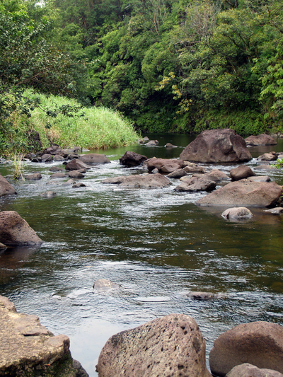 Stream_mauka_of_wbg_looking_mauka_jpg